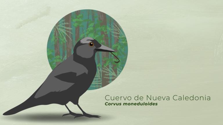 La clave ecológica en el uso de herramientas en aves