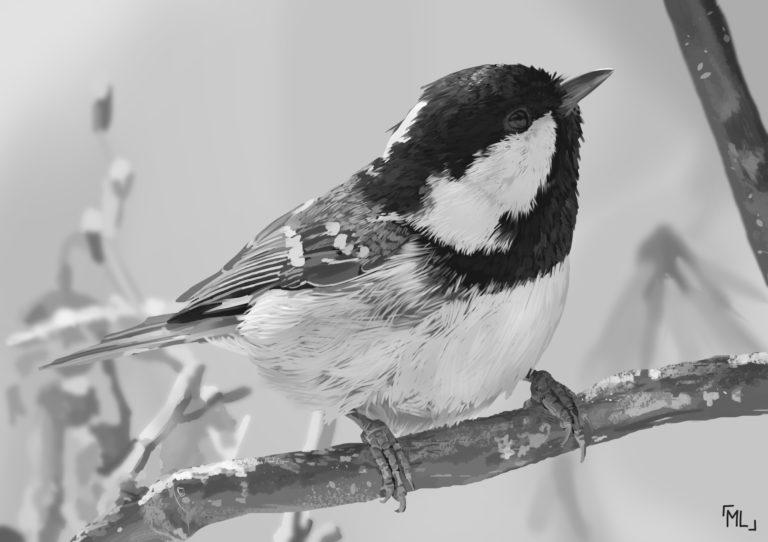 Las microestufas de los pájaros