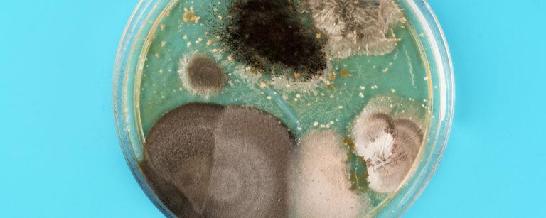 Microorganismos, sin ellos, usted no estaría leyendo este artículo