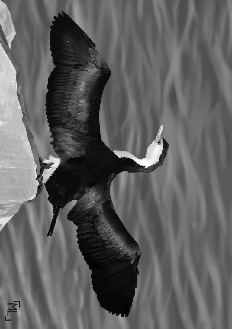 Aves de bajos vuelos
