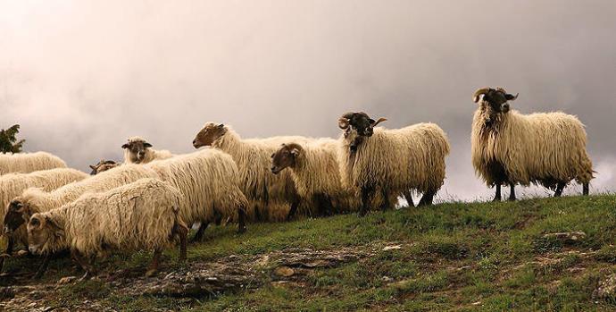 Naukas Pro 2021: Quesos de pastoreo frente a quesos de producción intensiva